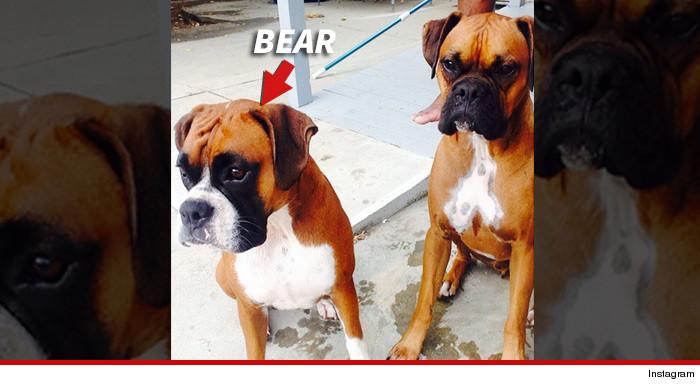 0121-jlo-casper-smart-dogs-instagram-9