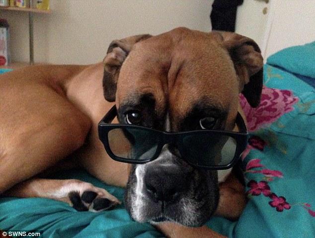 Dog Roxy