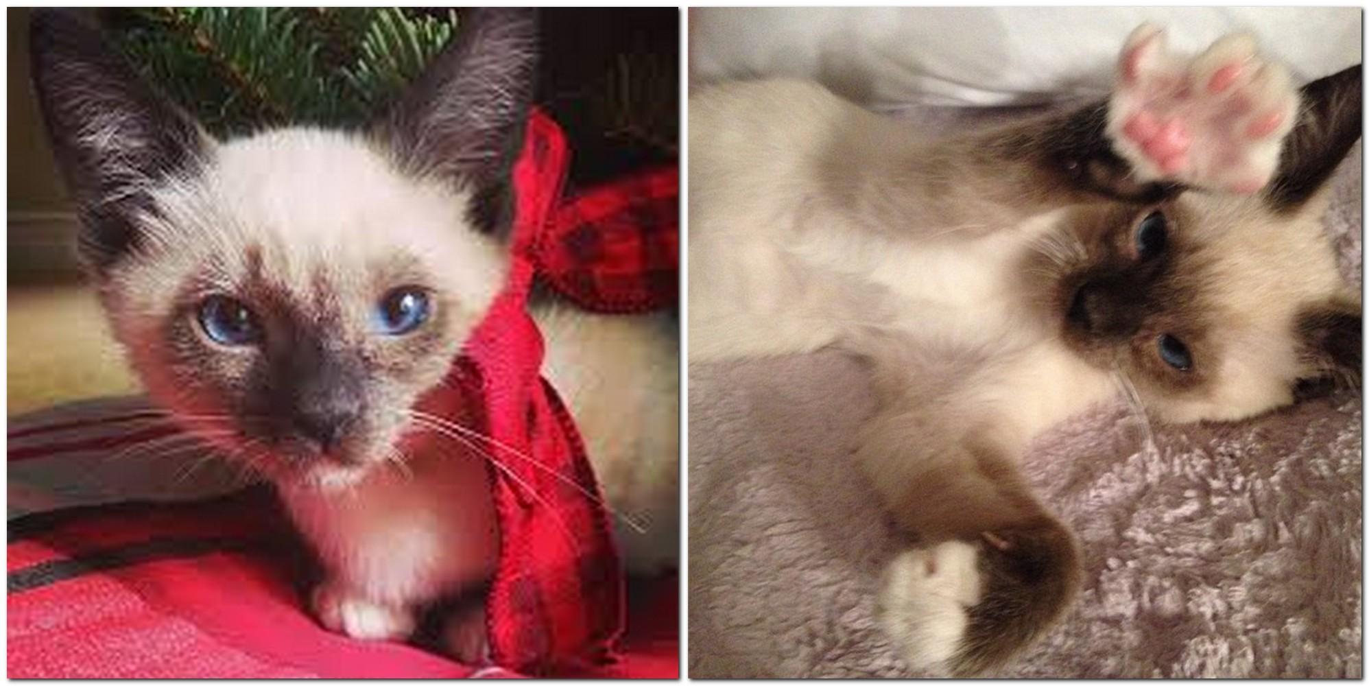 Cat Louis