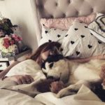 Bella Thorne`s pets: two dogs and two cats