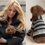 The pet lover – Blake Lively