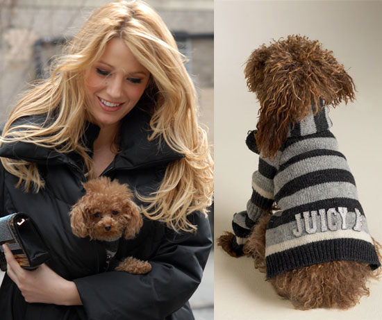Blake Lively is often spotted out with her tiny Maltipoo Penny, regularly bringing the tiny pup to the set of her latest film. Penny has had to get used to not always being top dog – she now shares her home with Ryan Reynolds' rescue mutt, Baxter.