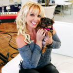 Britney Spears and her 5 friends-dogs