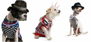 Gwen Stefani line of the pets' clothes
