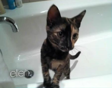 Cat Cleo (tortoise)