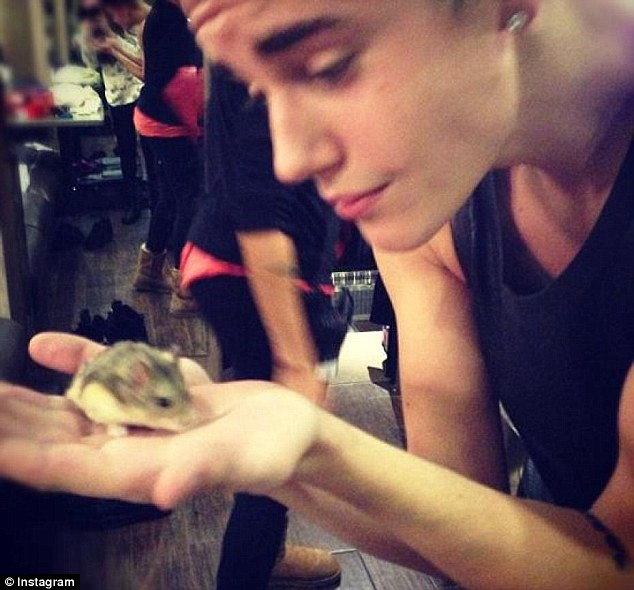 Hamster Pac