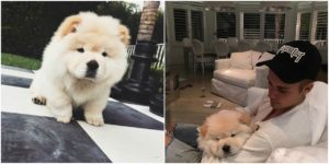 Justin Bieber new pet - dog Todd
