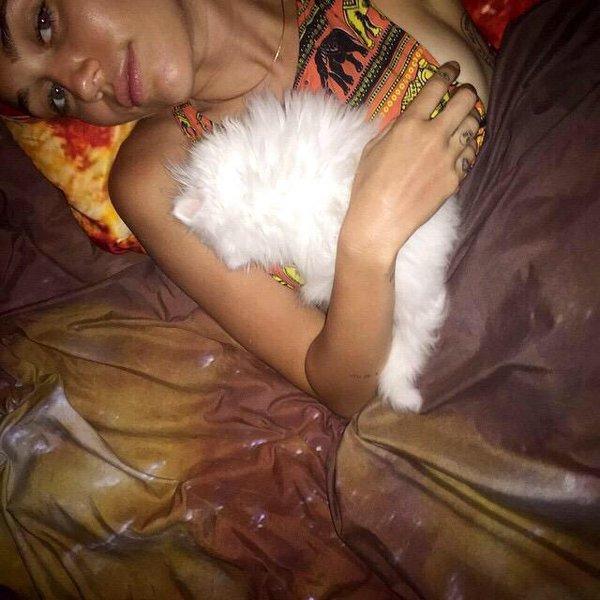 Cat Shanti Om Bb