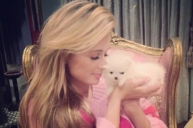Paris Hilton pet - dog Princess