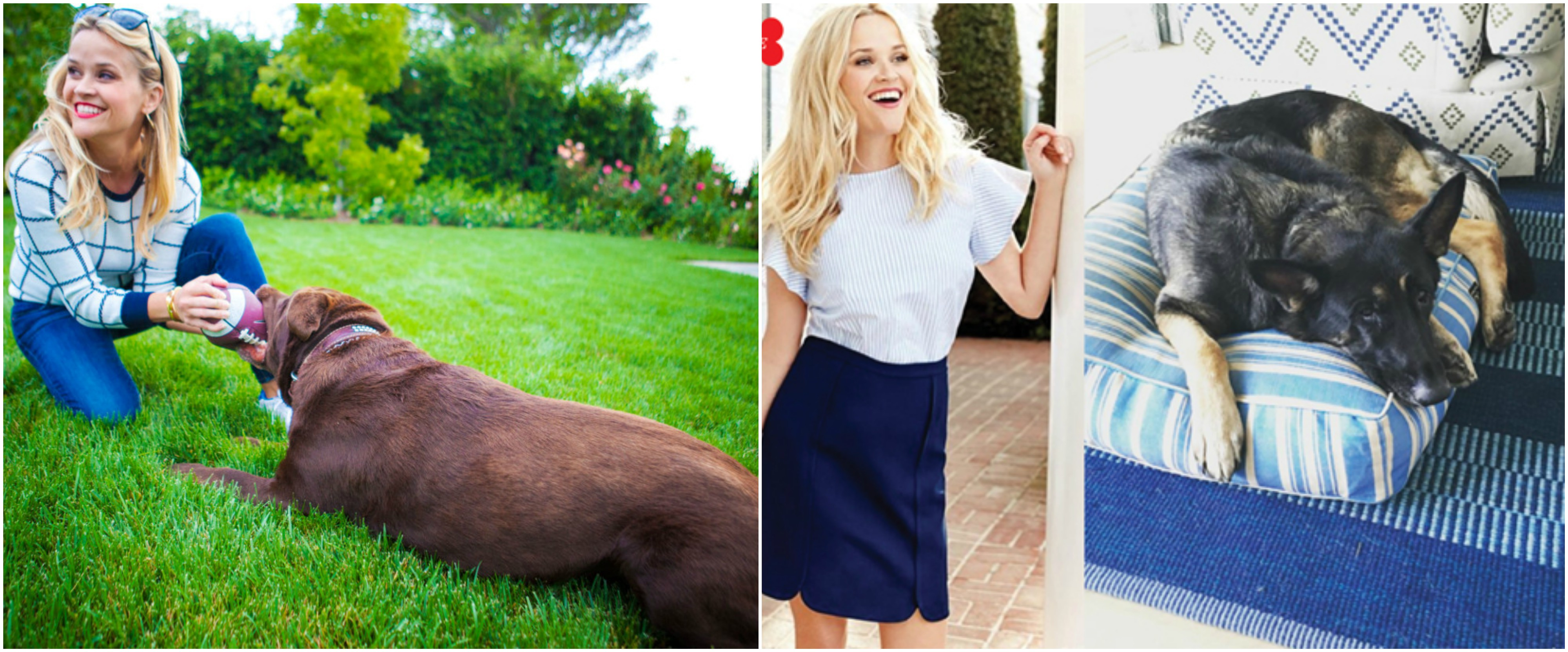 Reese Witherspoon`s Dog Hank Williams, Dog Nash