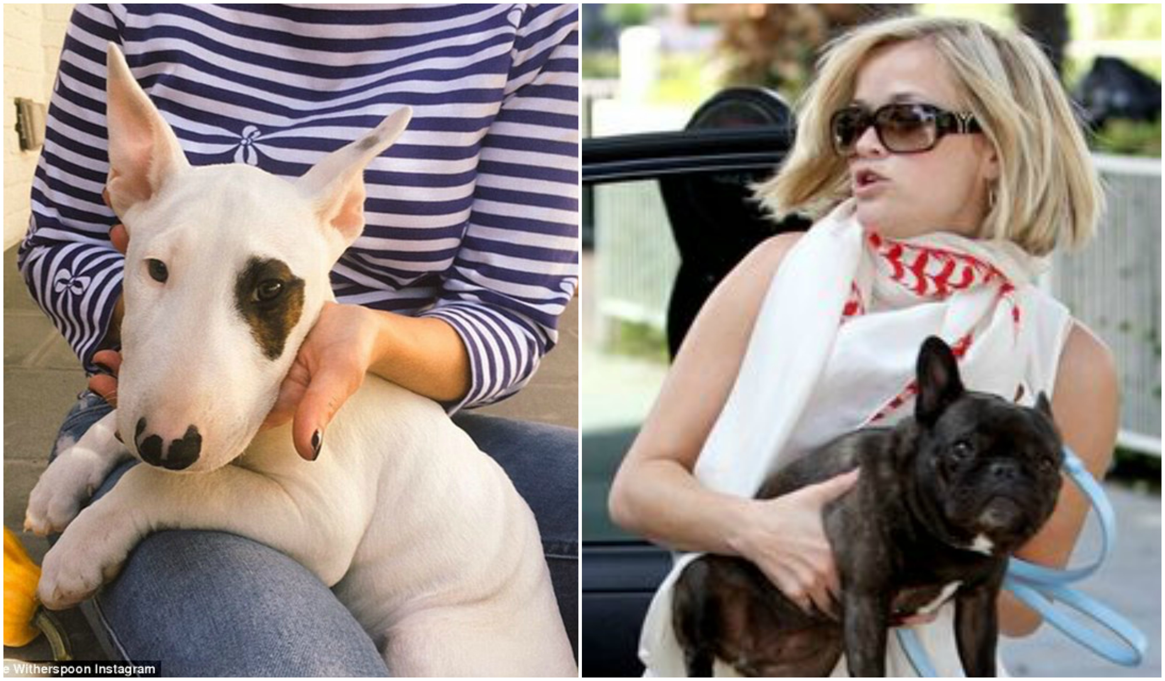 Reese Witherspoon`s Dog Lou Ann, Dog Coco Chanel