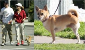 sandra bullock dog poppy