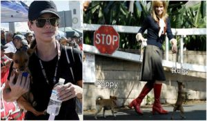 Sandra Bullock Dogs Ruby and Poppy