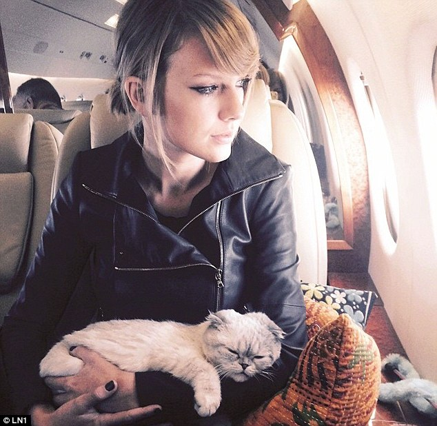 Cat Olivia Benson