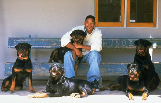 Will Smith`s dogs. In the right corner Indo and Zhaki