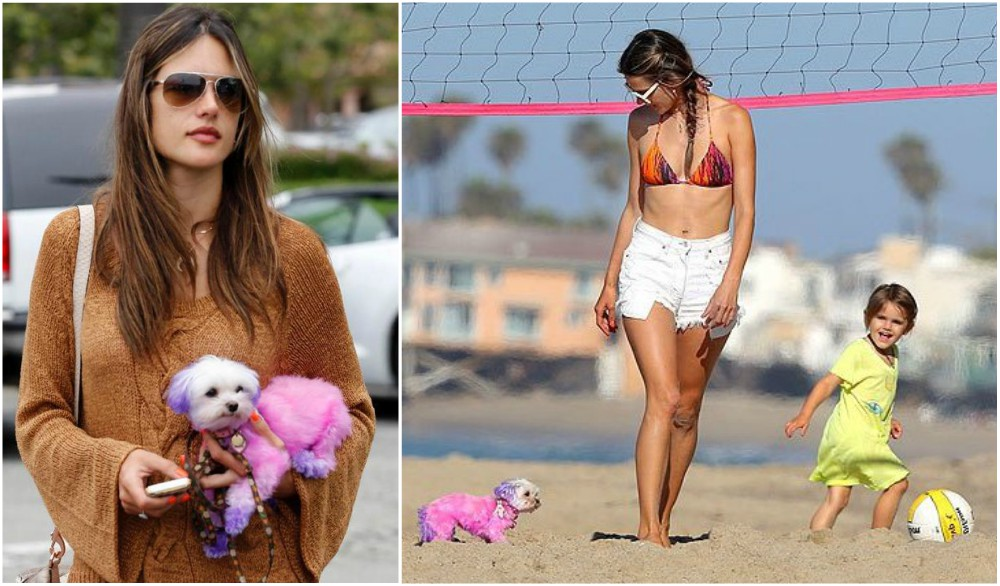 Alessandra Ambrosio with her pet - dog Lola