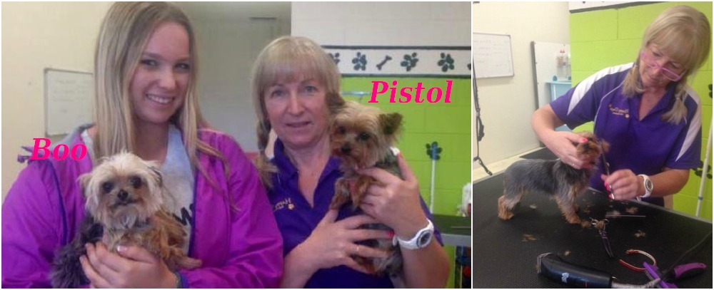 Amber Heard`s dogs - Pistol and Boo in grooming salon, Australia