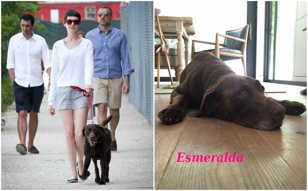 Anne Hathaway`s pets - dog Esmeralda
