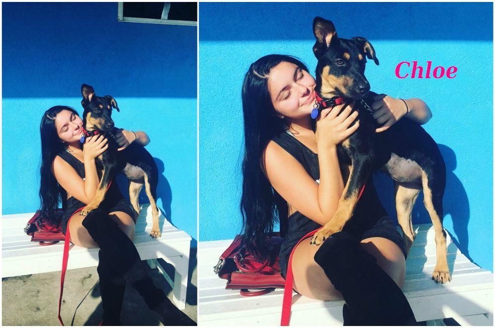 Ariel Winters` pet  - dog Сhloe