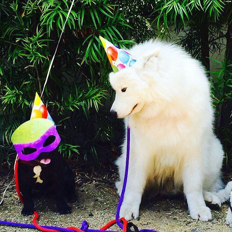 Ariel Winters' pets - dogs Casper and Rocco