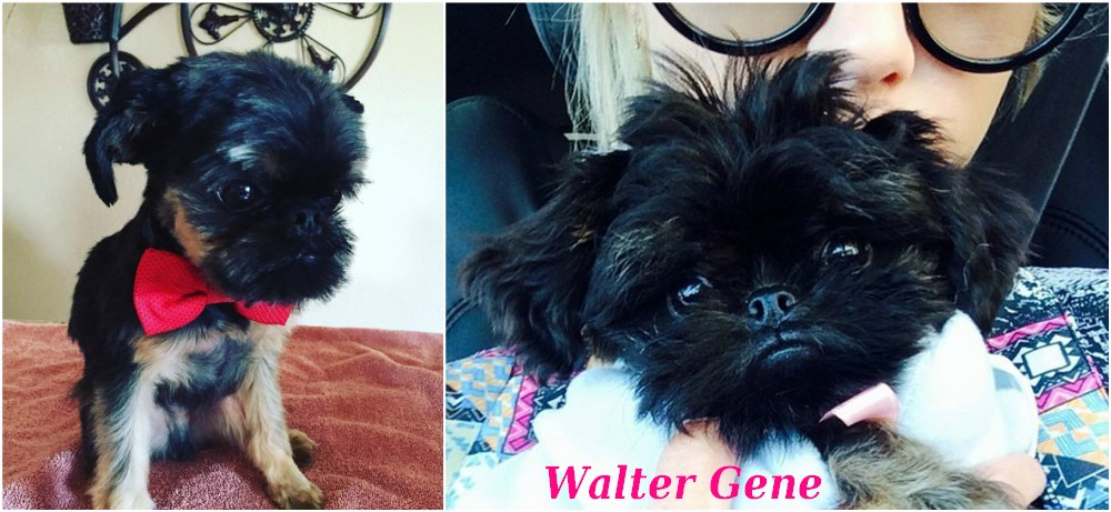 Ashley Benson pets - dog Walter Gene