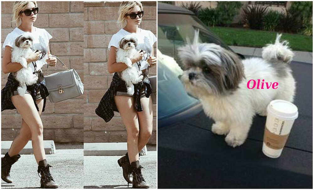 Ashley Benson pets - dog Olive