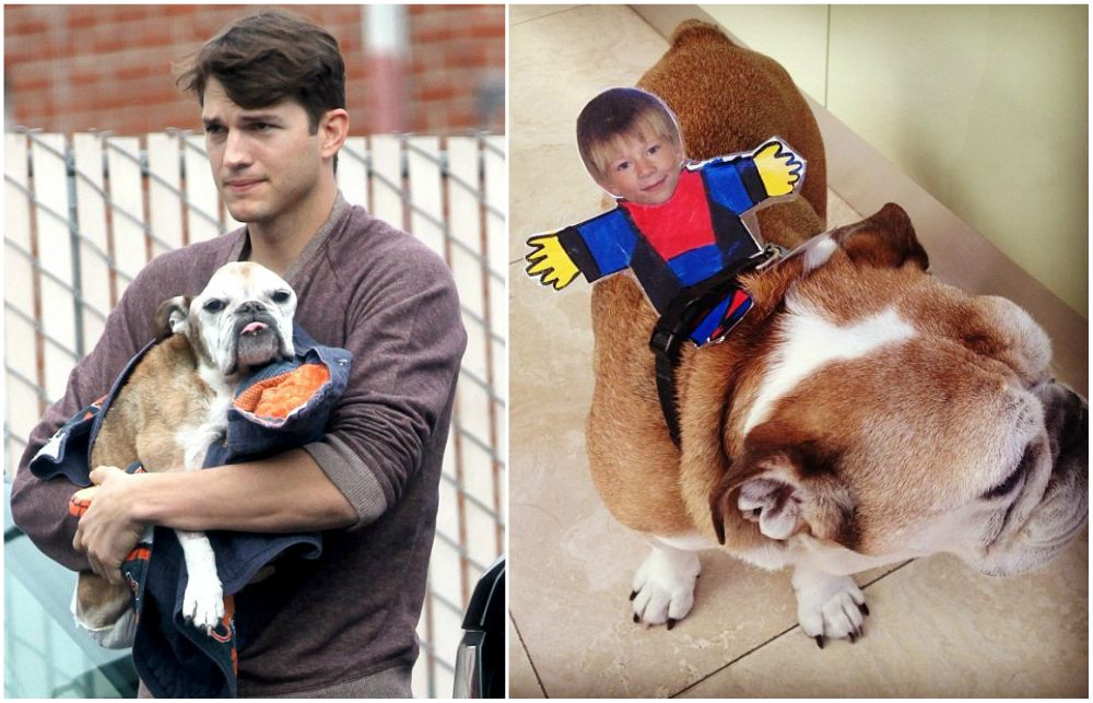 Ashton Kutcher pets dog Bulldog, died in 2013