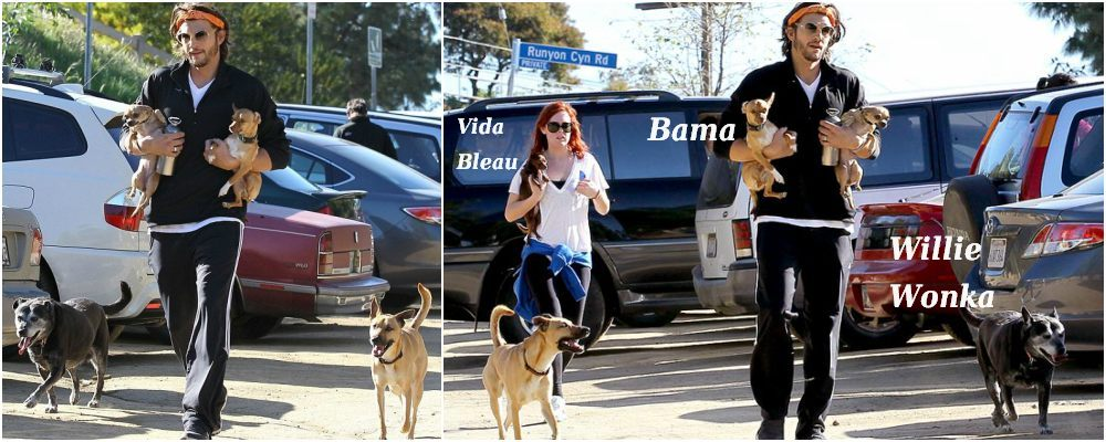 Ashton Kutcher pets - dogs Willie Wonka, Bama. Vida Bleau is Demi Moore`s pet.