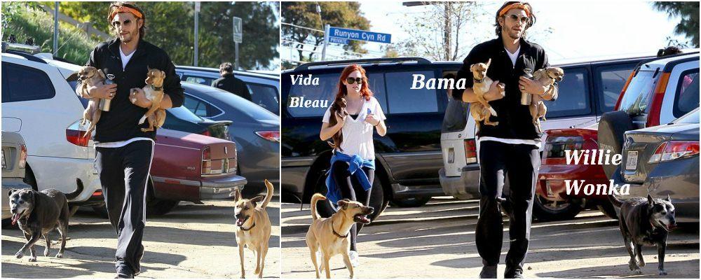 Ashton Kutcher pets - dogs Willie Wonka, Bama. Vida Bleau is Demi Moore`s pet.