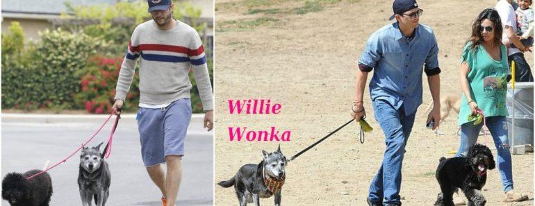 ashton_kutcher_pets_dogs_willie_wonka_and_mila_kunis_dog