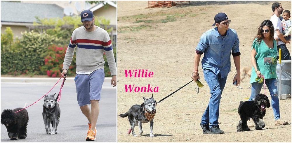 Ashton Kutcher`s pet - dog Willie Wonka and Mila Kunis` dog