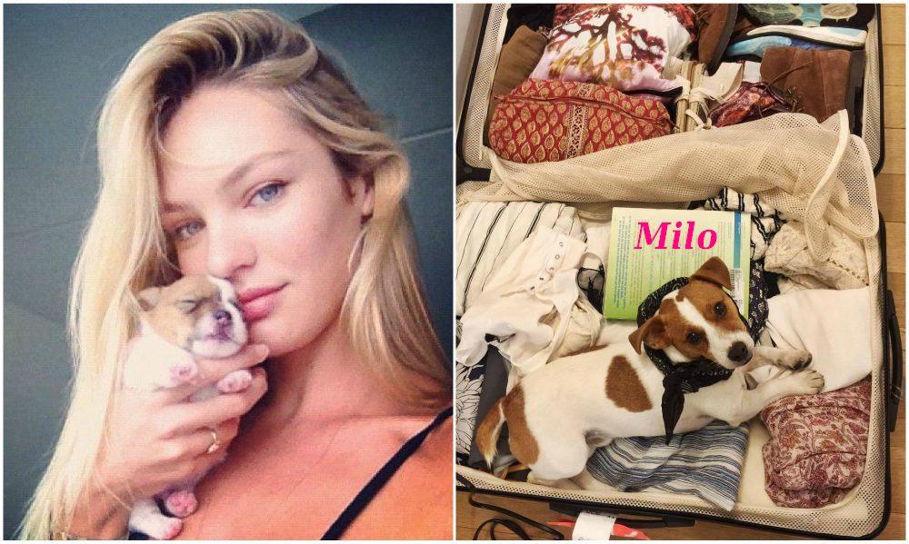 Candice Swanepoel pet - dog Milo