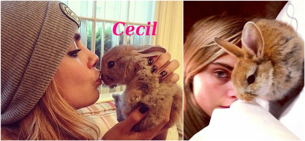 Cara Delevingne with her bunny Cecil