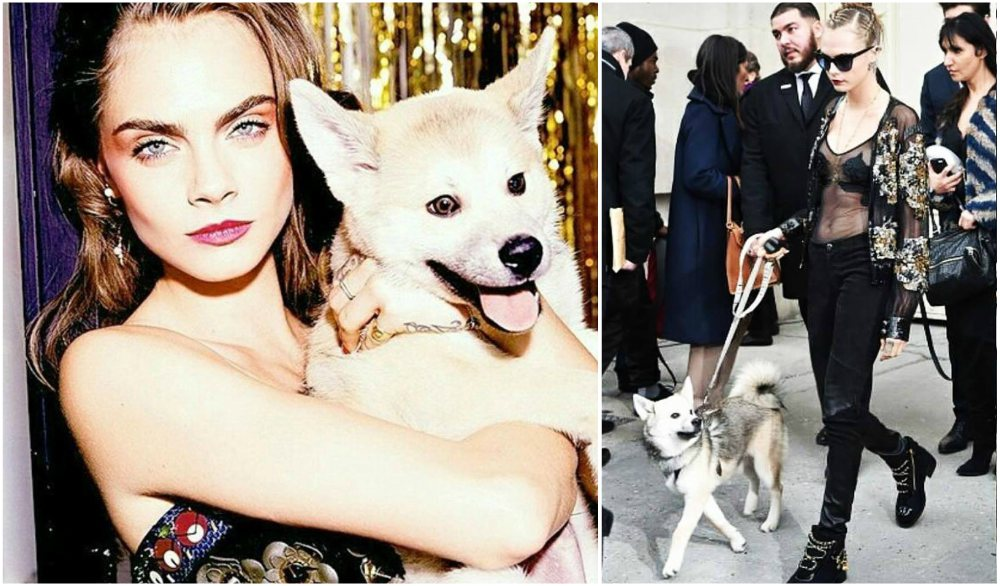 Cara Delevingne`s pet - dog Leo