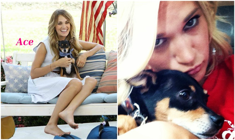 Carrie Underwood`s pet - dog Ace
