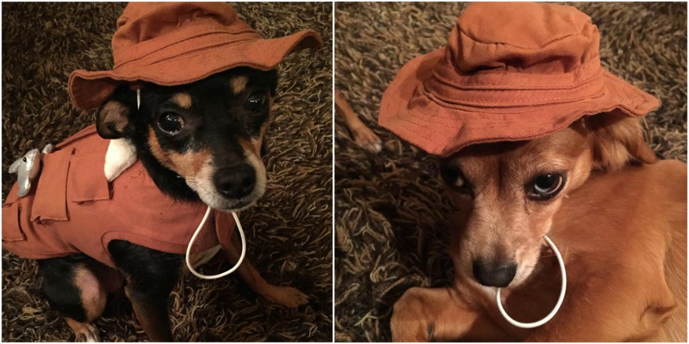 Carrie Underwood`s pets - Ace and Penny Jean are ready for Helloween