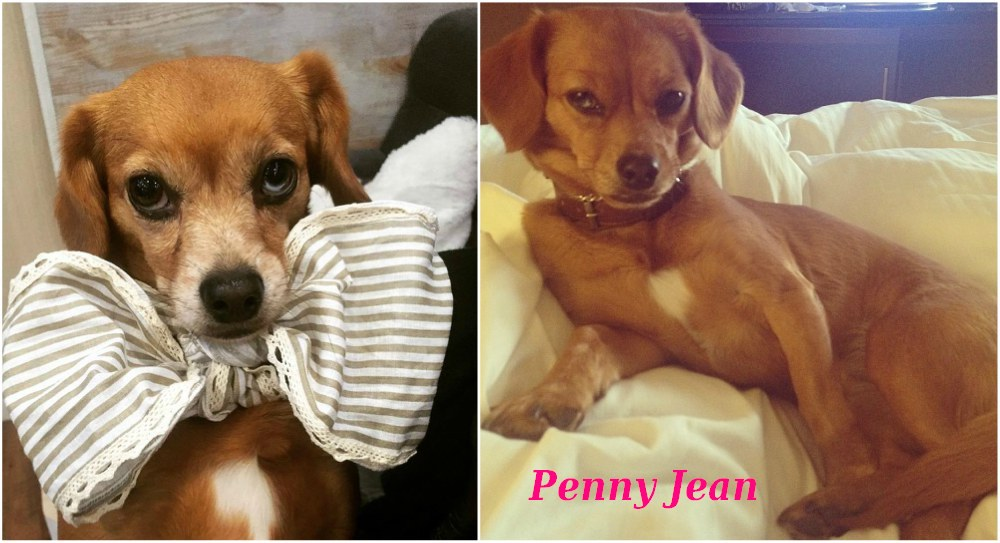 Carrie Underwood with her dog Penny Jean