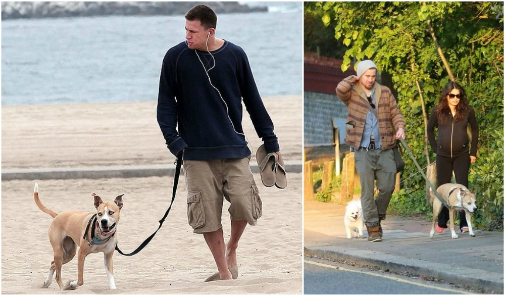 Channing Tatum`s dogs Lulu and Meeka
