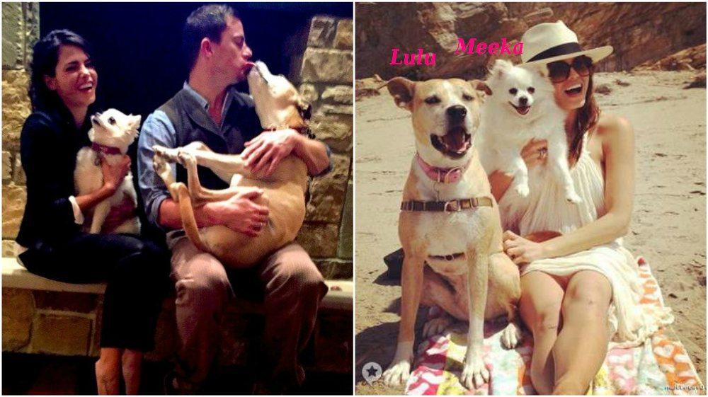 Channing Tatum pets - dogs Lulu and Meeka