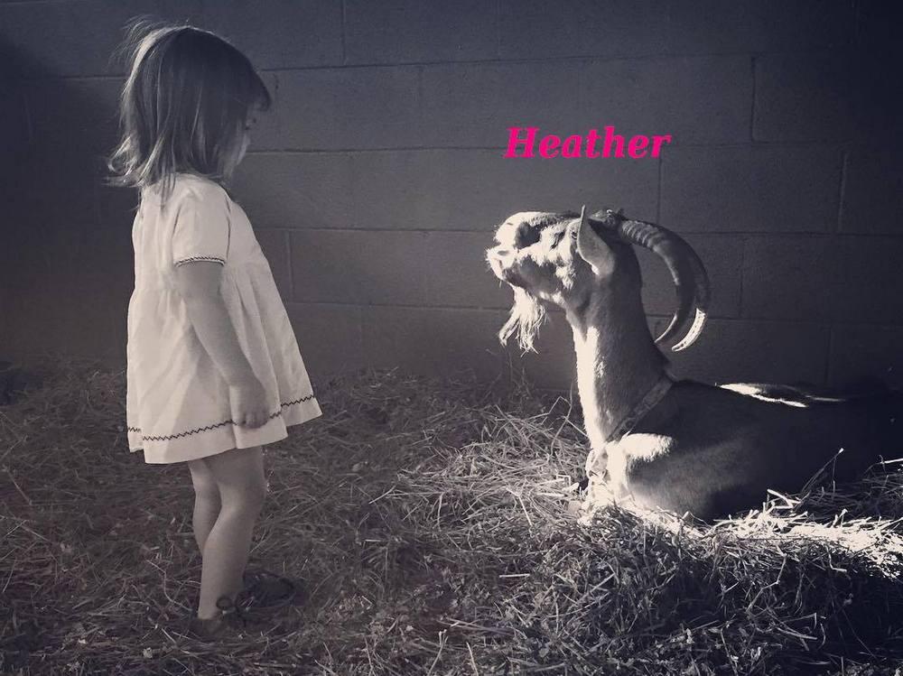 Channing Tatum`s goat Heather