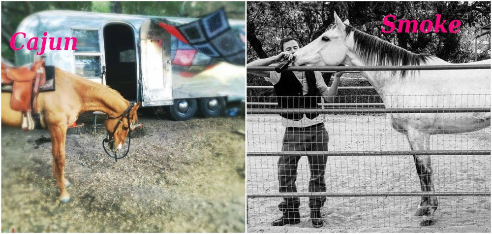 Channing Tatum`s horses - Cajun and Smoke