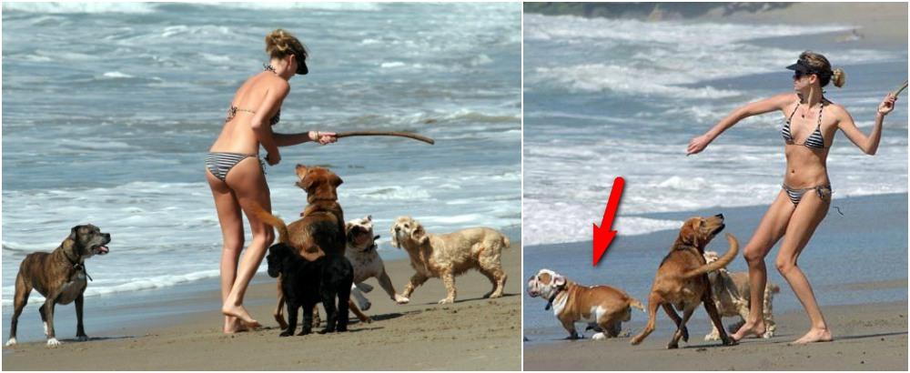 Charlize Theron with her pets on the beach