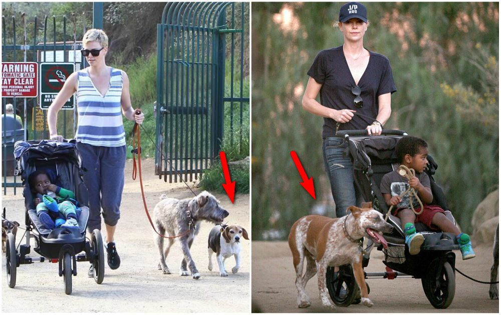Charlize Theron with her pets