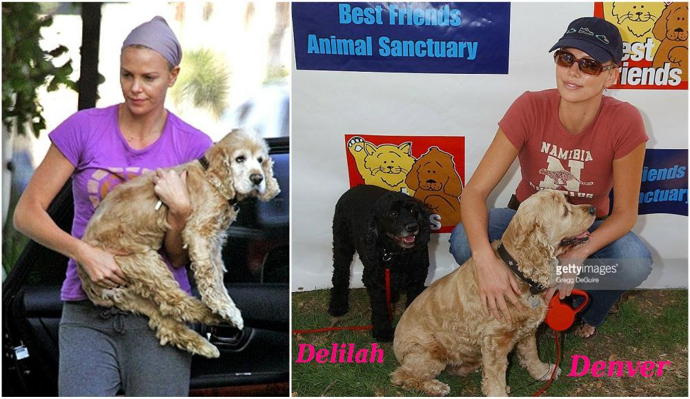 Charlize Theron with her pets - dogs Denver and Delilah