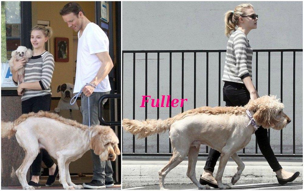 Chloe Grace Moretz pets - dog Fuller