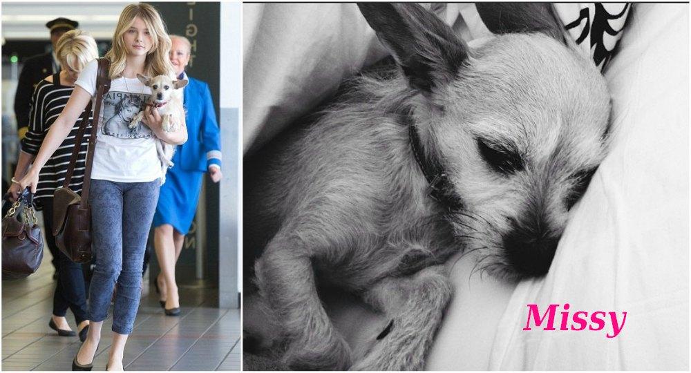 Chloe Grace Moretz pets - dog Missy