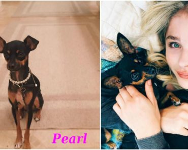 chloe_grace_moretz_pets_dog_pearl