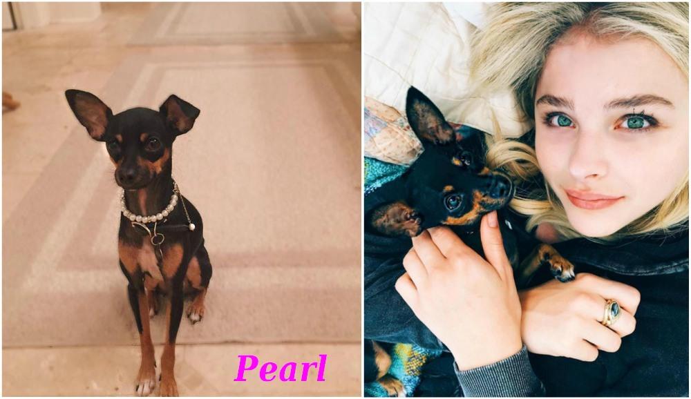 Chloe Grace Moretz pet - dog Pearl