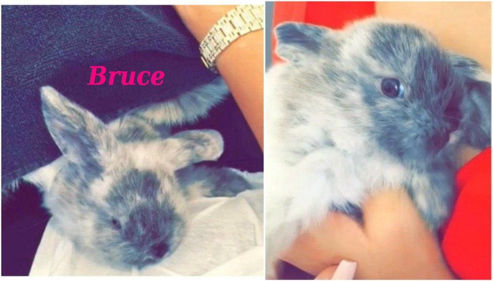 Kylie Jenner`s bunny Bruce, noone knows where he is now