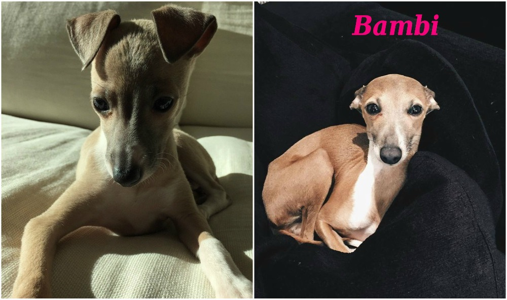 Kylie Jenner`s current dog Bambi